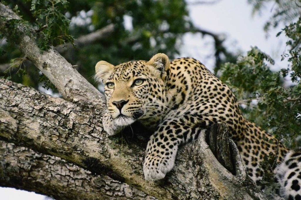 11 Days: Discover Kenya and Tanzania Budget Safaris