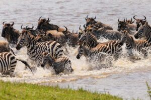 11 Days Tanzania Cultural and Wildlife Adventures
