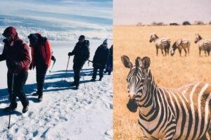 13 Days- Kilimanjaro Trekking And Wildlife Safaris