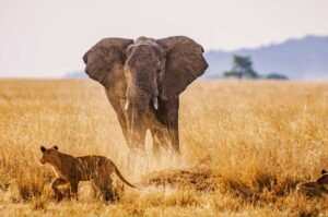 5 days big 5 wildlife safari in Tanzania