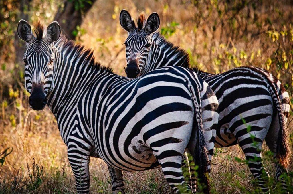 14 Days Discover Rwanda And Uganda