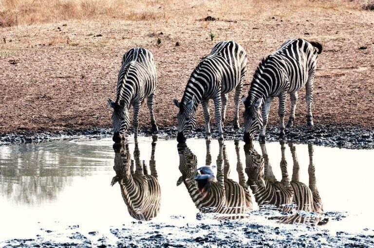 2 Day Kruger National Park Budget Safari
