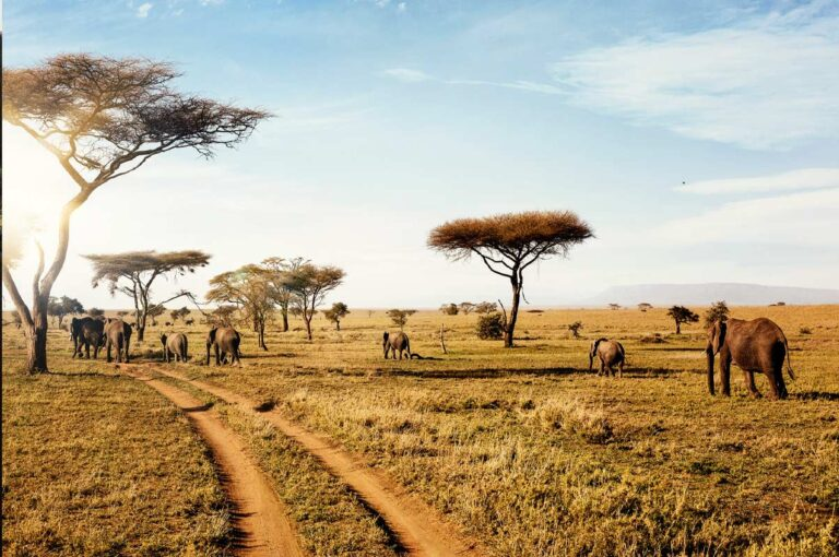 3 Things to Know About Safaris