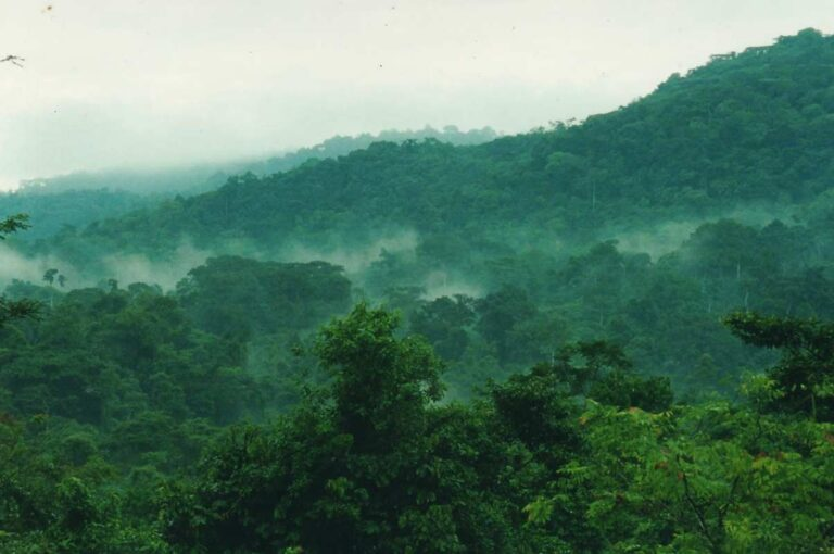 8 Days Rwanda Primate Safari -Volcanoes And Nyungwe Np