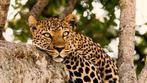 4 Days Tanzania Hakuna Matata Safaris